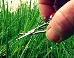 Аромат свежескошенной травы удивительным образом влияет на человека