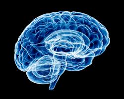 Медики определили разрушительное влияние соли на мозг